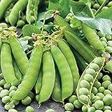 SeeKay Pea Twinkle 250 seeds - Vegetable