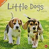 Wegler Little Dogs Broschurkalender - Kalender 2019