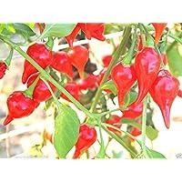 Portal Cool 30 semillas puras originales Chupetinho De salsa roja picante Peroncino Rojo