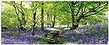Wallario Glasbild Blumenwiese im Wald voller blauer Hasenglöckchen - 50 x 125 cm in Premium-Qualität: Brillante Farben, freischwebende Optik