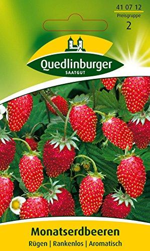 Erdbeeren, Monatserdbeeren Rügen, Fragaria vesca, ca. 100 Samen