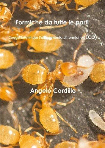 formiche-da-tutte-le-parti-suggerimenti-per-lallevamento-di-formiche-eco