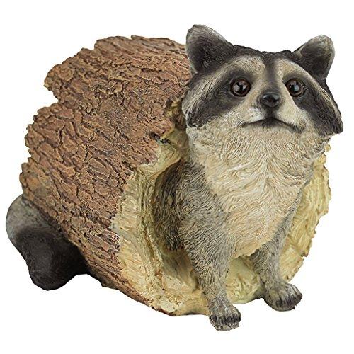 Design Toscano by Blagdon QM24625001 - Decorative figure (resin), raccoon design inside trunk