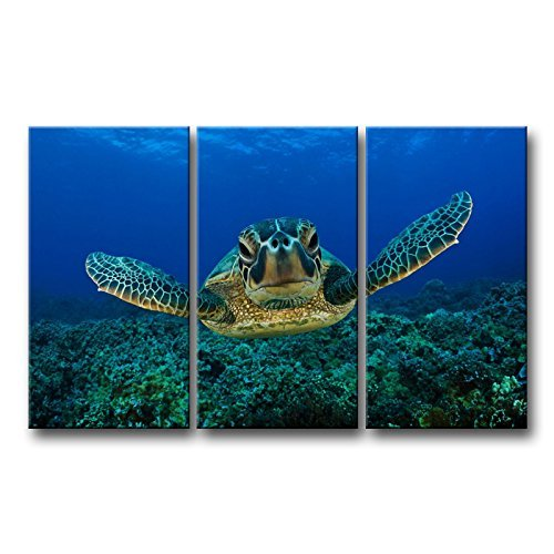 3-teilig blau-Wand Kunst Bild Schildkröte nach Schwimmen im Meer Druck auf Leinwand der Animal Bilder Öl für Home Moderne Dekoration Print Decor (Stärke Kiss)