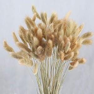 HUAESIN 100pcs Getrocknete Pampasgras Natürliche Getrocknete Gräser Pennisetum Schwanz Gras Getrocknete Blumen Trockenblumen für Hause Hochzeit Party Hotel Vase Deko 45cm