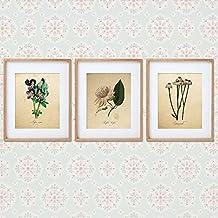 Pack de láminas INFUSIÓN. Posters con imágenes de botánica. Decoración de hogar. Láminas para enmarcar. Papel 250 gramos alta calidad
