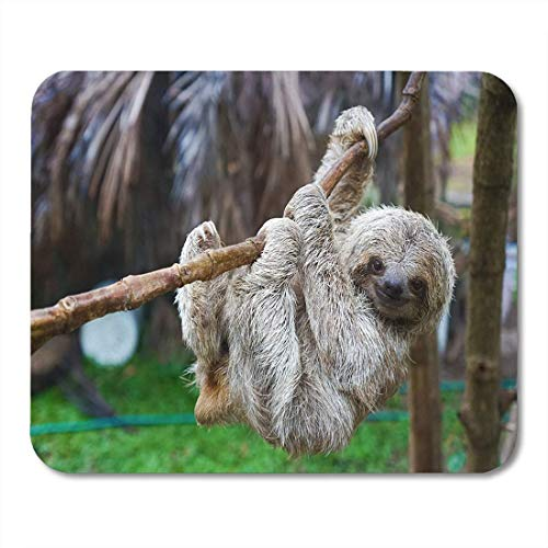 AOHOT Mauspads Brown Puerto Sloths in Rescue Centre Costa Rica San Jose Green Three Toed Mouse pad 9.5