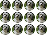 Lhasa Apso edible cake toppers (12 of 38mm 1.5inch) #163