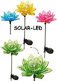 """Solarblume - """" Blüte & Blume - BUNT """" - incl. Name - Solar Leuchte mit LED Licht - Garten Wetterfest für Außen - Solarbetrieben / Figur & Gartendeko Solarleuchte - Laterne Gartenleuchte Außenbeleuchtung - Solarleuchten Dekofigur / photovoltaik - Lampe / Gartendeko - Seerose"""