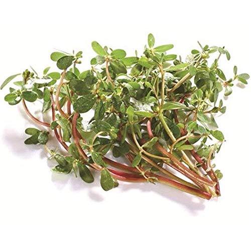Vistaric Imixlot 3000 Pcs/Sac Purslane Graines Aliments Non Traitées Pour La Maison Jardin Décoration Plantation Par Soi-même