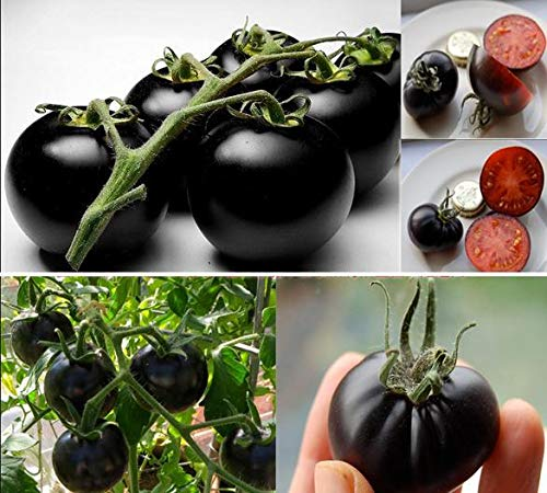 SummerRio 20 Stücke Tomatensamen Tomato Seeds Schwarz Cherry Russian Heirloom Vegetable Seed