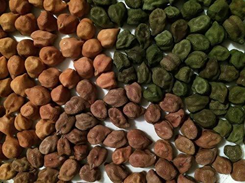 PLATFIRM Keim Seeds: 1 Unze je Kala Chana Desi Kichererbse (Kichererbse) Variety Seed