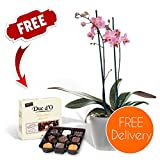 Gifts Flowers Food Best Deals - Fresh Flowers Delivered - FREE UK Delivery - Potted Indoor Twin-Spiked Orchid Plant with FREE Chocolates and Flower Food and BONUS Ebook Guide - Perfect for birthdays, anniversaries and thank you gifts