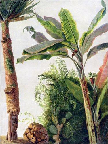 Posterlounge Alu Dibond 90 x 120 cm: Bananenbaum von Frederic Edwin Church/Bridgeman Images
