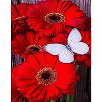 Dorara DIY 5D Kit de pintura de diamantes, cristales bordados cuadros arte manualidades para decoración del hogar,Gerbera, flores,10 x 12 pulgadas