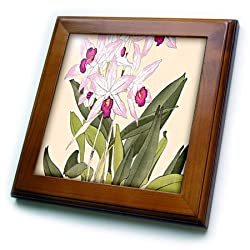 3dRose ft_175431_1 Pretty Light and Dark Pink Laelia Anceps Orchids-Framed Tile Artwork, 8 by 8-Inch