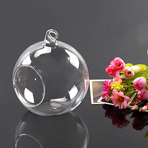 boldion (TM) Hot weltweit 8cm hängend Glas Blumen Pflanze Vase Ständer Terrarium Container