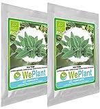 BIO Sauge - Graines de plantes aromatiques/Intérieur & Extérieur