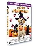 Le chien d'halloween