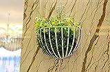 QFF Flor de estilo europeo flor marco de la pared colgante de flores semicircular decoración de la pared de la cesta de la flor colgando de baloncesto de la cesta marco de la flor de flor olla rack ( Color : Blanco )