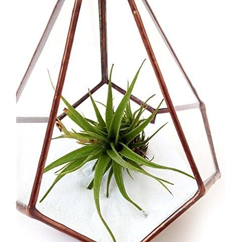 Terrario in vetro a goccia piccole geometrico