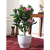 Fourwalls Decorative Artificial Polyester And Polyurethane Camelia Floor Plant Without Pot (10 Cm X 12 Cm X 65 Cm, Pink)