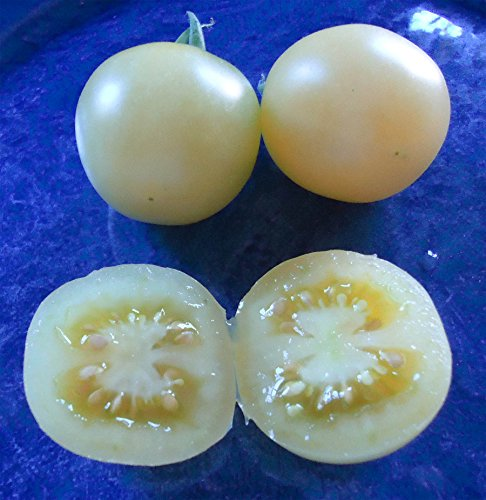 Weisse tomate ? Grosse viande tomate ? environ 200 (.) Graines tomates/Pack
