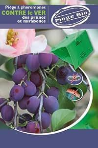Piège contre le carpocapse de la prune et mirabelle