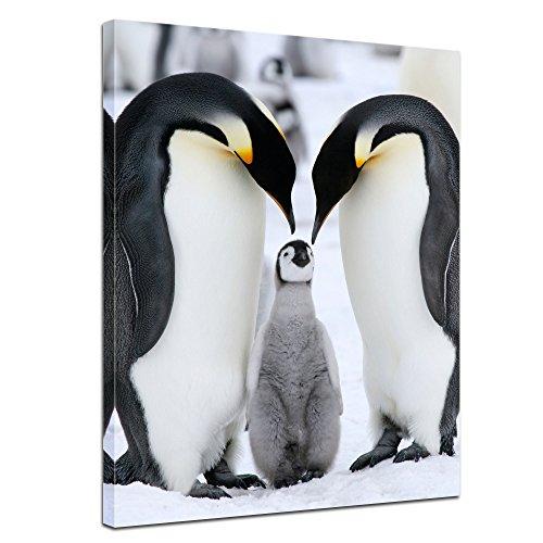 familie - Bild auf Leinwand - 90 x 120 cm 1 teilig - Leinwandbilder - Bilder als Leinwanddruck - Wandbild von Bilderdepot24 - Tierwelten - Leben in der Arktis - Pinguine mit Nachwuchs (Pic Von Pinguin)