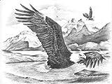 Reeves Malen nach Zahlen Skizzieren Adler