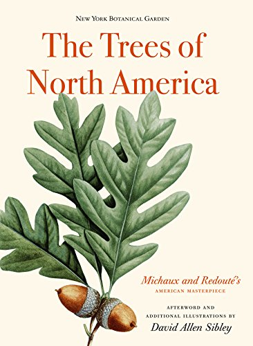 the-trees-of-north-america-michaux-and-redoutes-american-masterpiece