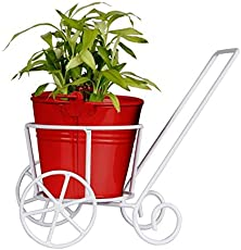 TrustBasket Trolly with Red Bucket Planter and Lucky Bamboo Plant