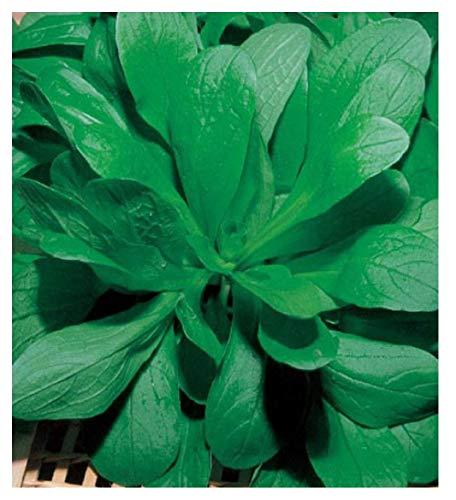 Inception Pro Infinite 50 C.ca Semi Valeriana - Valerianella Locusta In Confezione Originale Prodotto in Italia - Sfiziosità Vegetale - Valeriane