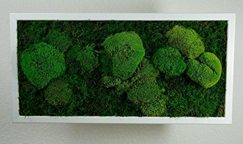 Moosbild Wandbild mit Moos Kugelmoos Moosplatte Pflanzenbilder Moosbilder versch. Maße günstig (60x30 cm, weiß)