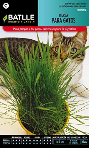 semillas-batlle-098101bols-hierba-para-gatos
