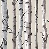 Brewster FD31051 Birch Tree Wallpaper-Natural