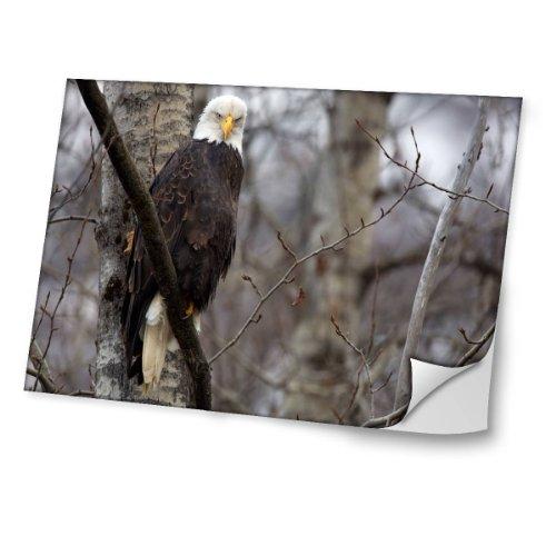 Vögel 10030, Adler, Skin-Aufkleber Folie Sticker Laptop Vinyl Designfolie Decal mit Ledernachbildung Laminat und Farbig Design für Laptop 15.6