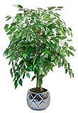 Maia Shop Ficus mit natürlichen Stämmen, hergestellt mit den besten Materialien, ideal für die Innendekoration, Künstlicher Baum (105 cm)