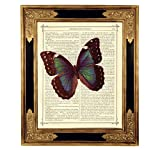 Schmetterling Morpho Poster Kunstdruck auf antiker Buchseite Insekt Geschenk Bild ungerahmt