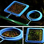 Gaddrt Aquarium Fish Feeding Ring, Fish Tank Station Floating Tary Food Feeder with Suction Caps 5