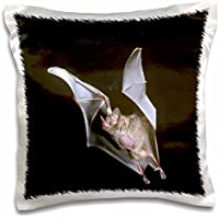 Danita Delimont - Bats - Leaf-nosed Fruit Bat wildlife - NA02 DNO0390 - David Northcott - 16x16 inch Pillow Case (pc_83935_1)