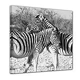 """Bilderdepot24 Immagine su telaio a cunei """"Accoppiamenti della zebra"""" 100x100 cm - Già montato sul telaio, stampa su tela di cotone 100%, Stampa artistica intelaiata e pronta da appendere"""