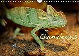 Chamäleons (Wandkalender 2017 DIN A4 quer): Chamäleons - einfach Wunderbar (Monatskalender, 14 Seiten ) (CALVENDO Tiere)