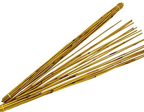 Reed Stäbe, circa 90 cm, Bund a 60 Stück, sonnengelb