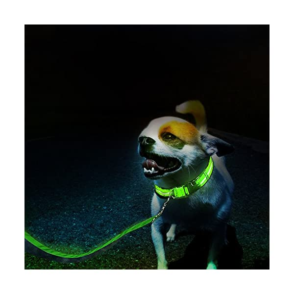 ZeWoo USB Rechargeable LED Dog Safety Collar + LED Dog Lead/Leash - Great Visibility & Improved Safety 2
