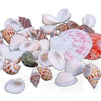 100g Mixed Sea Beach Shells Crafts Seashells Aquarium Decor Photo Props Beach Theme Party Wedding Decor DIY Crafts Fish… 3