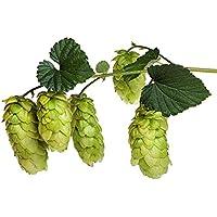 "PLAT FIRM Semillas DE GERMINACION: Tahoma Beer Hops Vine - Humulus - Â¡Cultiva tu Propia Cerveza! - 4""Olla"