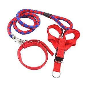 Ylen Nylon Gewebt Hund Leine Halsband Geschirre 3 Satz Haustier Ausbildung Hundeleine Perfekt für Kleine Mittlere und Große Hunde