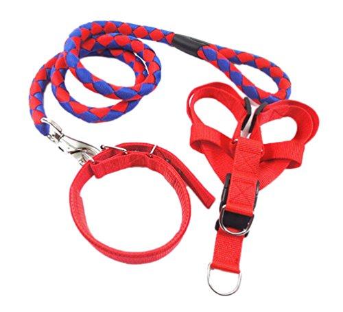 Satz Von Kostüm Drei - Ylen Nylon Gewebt Hund Leine Halsband Geschirre 3 Satz Haustier Ausbildung Hundeleine Perfekt für Kleine Mittlere und Große Hunde