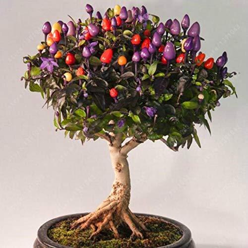 Vobome 50 teile/beutel Bunte Chili Samen Garten Ornament Essbare Pfeffer Bonsai Gemüse Gemüse